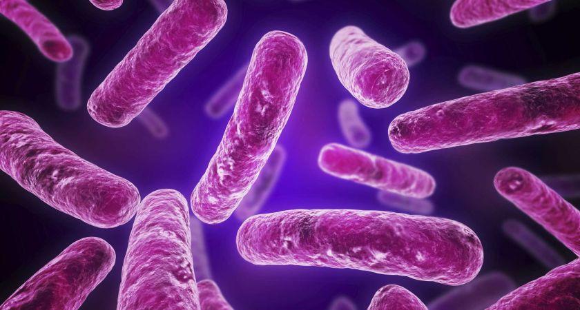 Burnos probiotikai Lactobacillus Salivarius